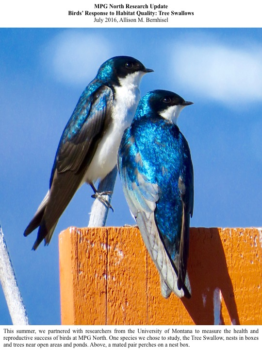This summer, we partnered with researchers from the University of Montana to measure the health and reproductive success of birds at MPG North.