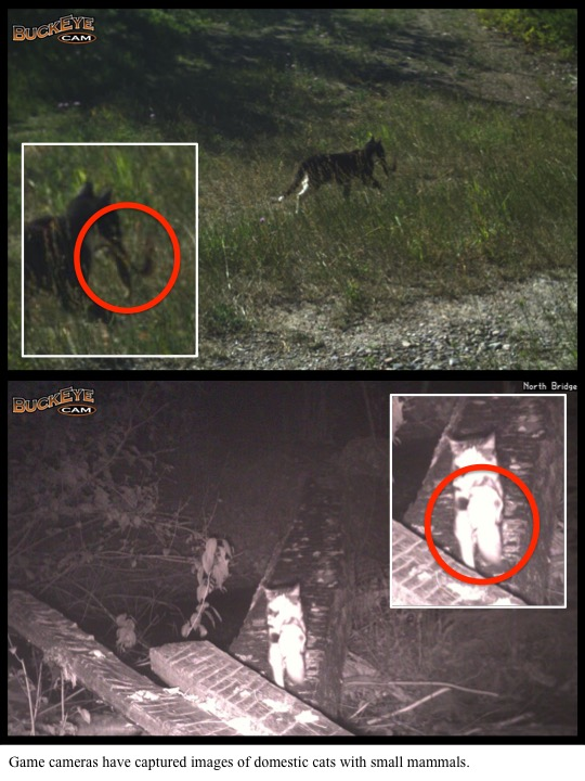 Game cameras have captured images of domestic cats with small mammals.