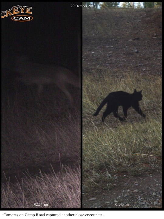 Cameras on Camp Road captured another close encounter.