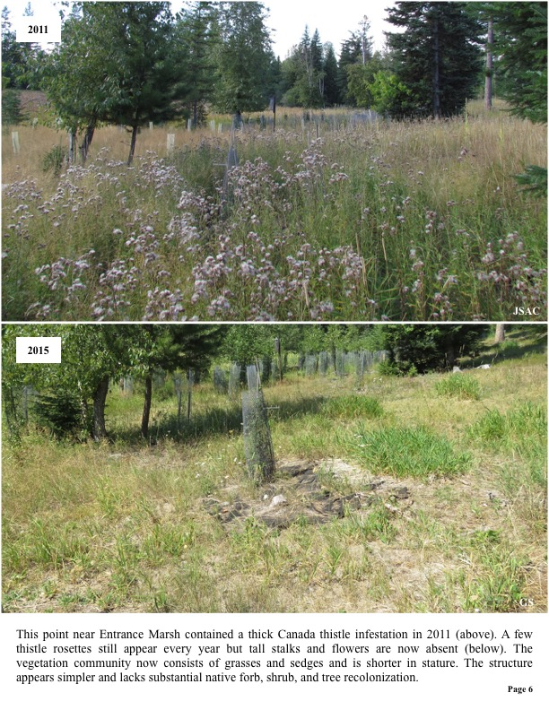 This point near Entrance Marsh contained a thick Canada thistle infestation in 2011