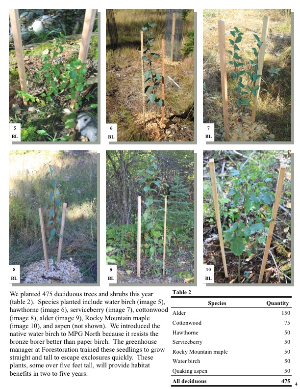 We planted 475 deciduous trees and shrubs this year (table 2). Species planted include water birch, hawthorne, serviceberry...