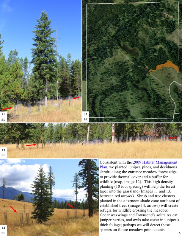 Consistent with the 2009 Habitat Management Plan, we planted juniper, pines, and deciduous shrubs along the entrance meadow...
