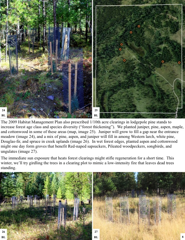 The 2009 Habitat Management Plan also prescribed 1/10th acre clearings in lodgepole pine stands to increase forest age class...