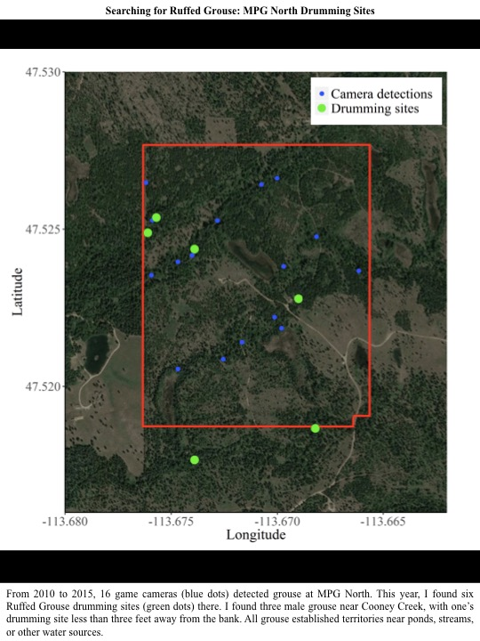 From 2010 to 2015, 16 game cameras (blue dots) detected grouse at MPG North. This year, I found six Ruffed Grouse drumming sites (green dots) there.