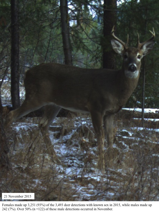 Females made up 3,251 (93%) of the 3,493 deer detections with known sex in 2015, while males made up 242 (7%).