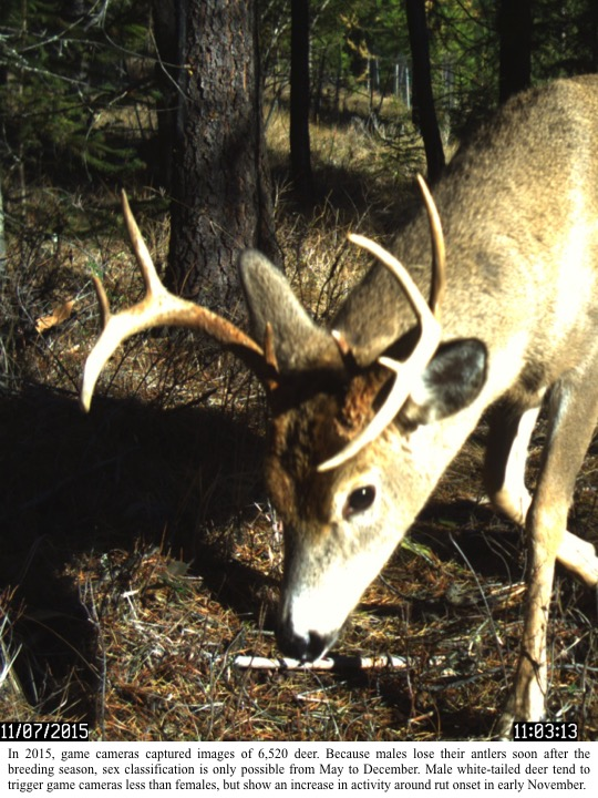 In 2015, game cameras captured images of 6,520 deer.