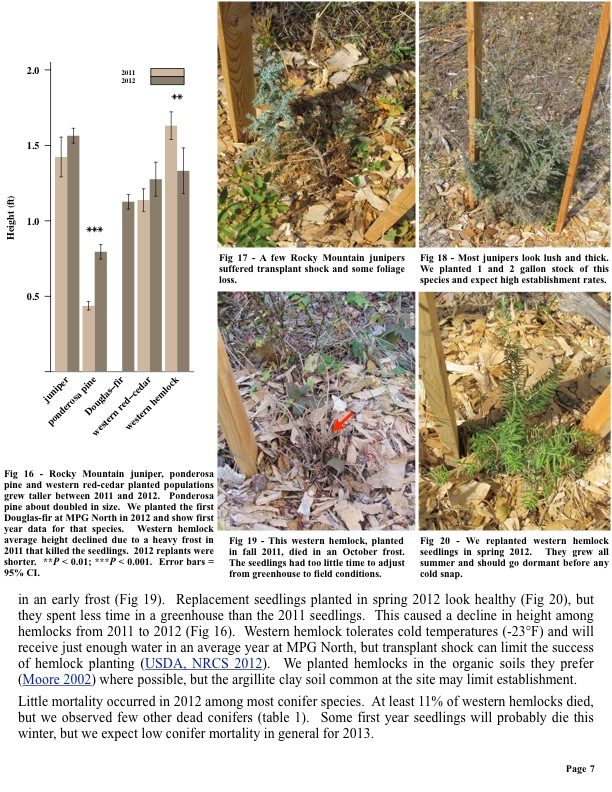Fig 16 - Rocky Mountain juniper, ponderosa pine and western red-cedar planted populations grew taller between 2011 and 2012.