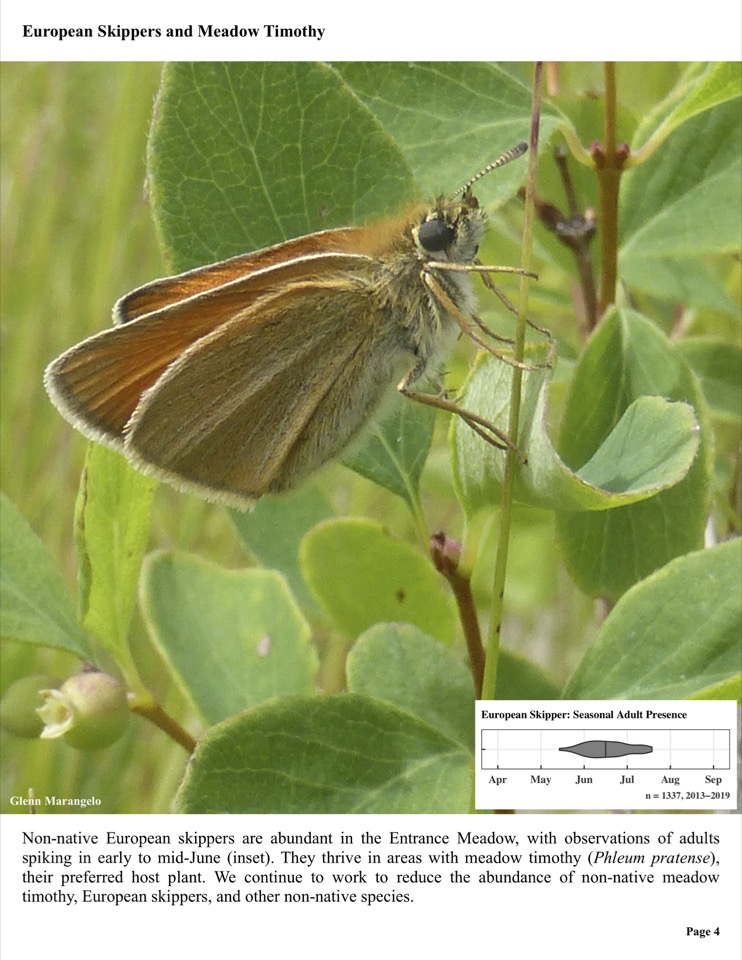 Non-native European skippers are abundant in the Entrance Meadow, with observations of adults spiking in early to mid-June