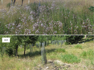 Invasive Plant Species Management from 2011-2015