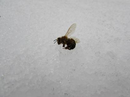 Frozen Bee by Gus Seward