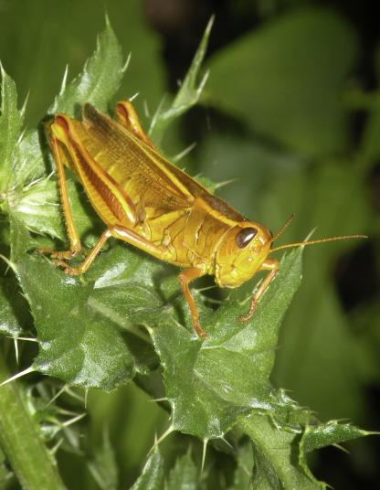 Grasshopper by Jeff Clarke