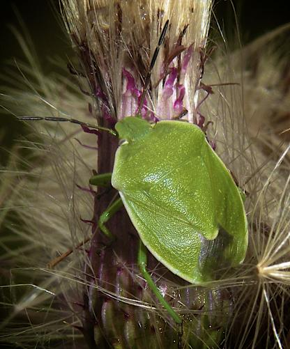Stink Bug by Jeff Clarke